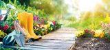 Blumenbeete richtig bepflanzen